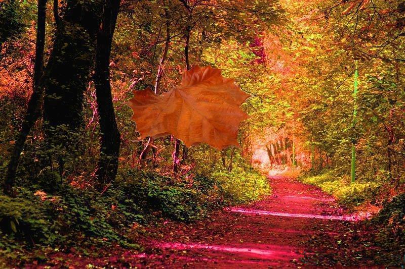 De Roep van het Heilige woud