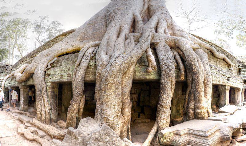 De Moederstamboom