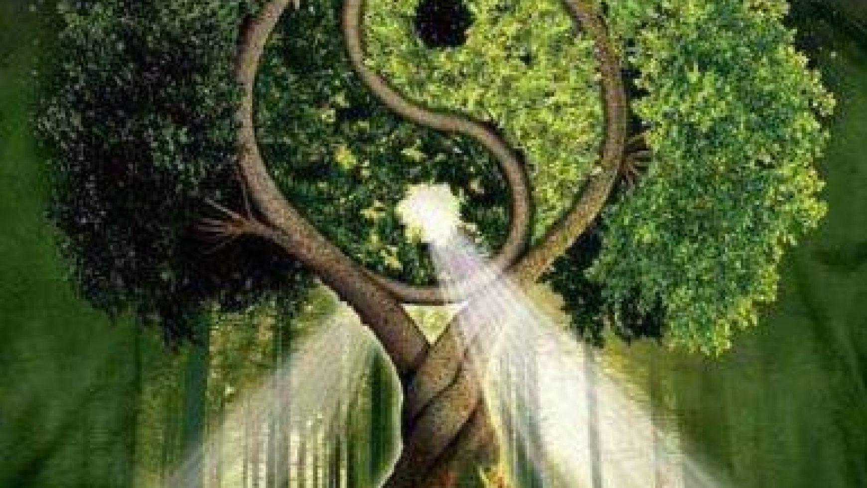 Je kunt de boom in