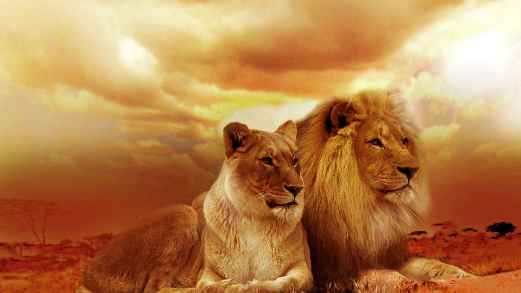 De Leeuwenpoort.
