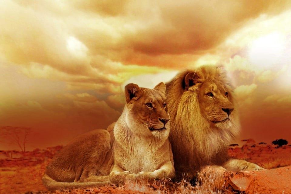 Afbeeldingsresultaat voor spirituele leeuwenpoort open deur
